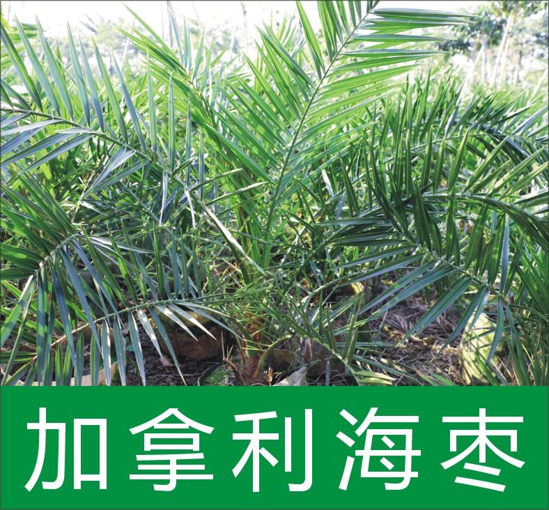 广东省中山市木林森花木场