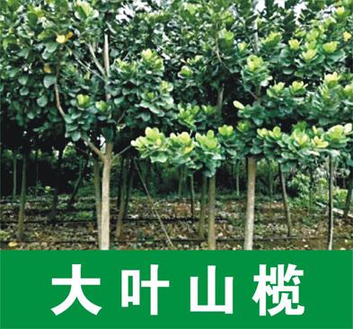 广东省湛江市麻章区绿源花卉场
