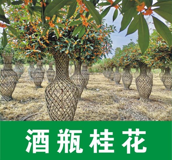 四川日香桂农业科技有限公司