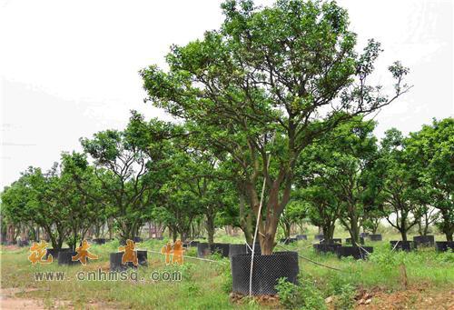 树名称大全和图片大全