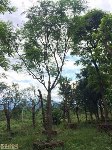 常见树种类名称及图片
