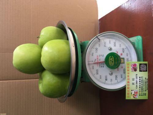 高度100公分枣树图片